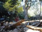 千葉公園 落ち葉