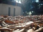 千葉公園 落ち葉と建物