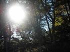 千葉公園 木々の間から太陽がこんちわ。