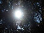 千葉公園 林から太陽がこんちわっす。