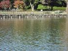 千葉公園 ボートから