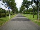 鎌取〜おゆみの四季の道