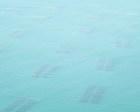 「江戸前え〜のり」空から・・海は青かった
